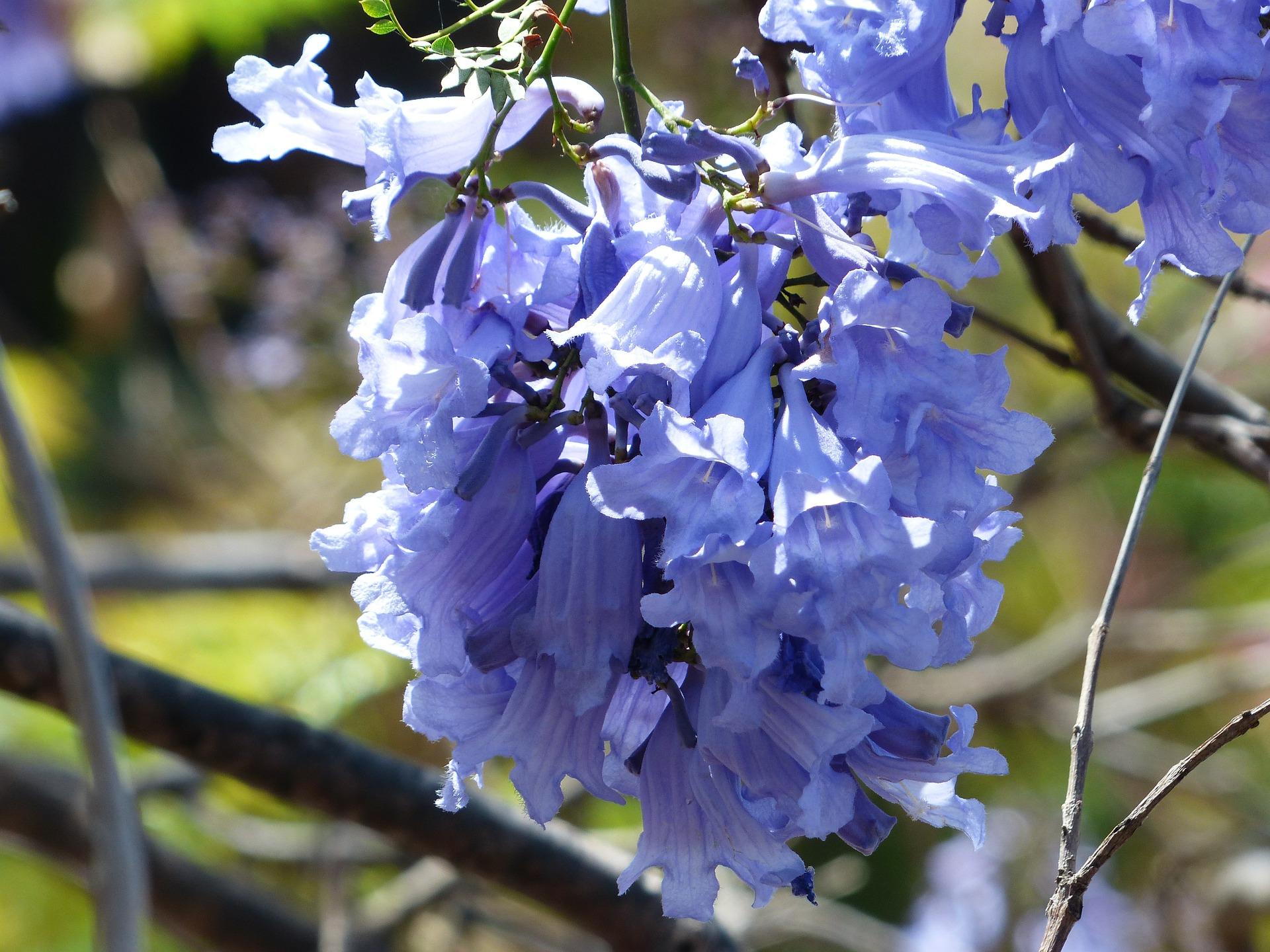 flowers-384273_1920.jpg