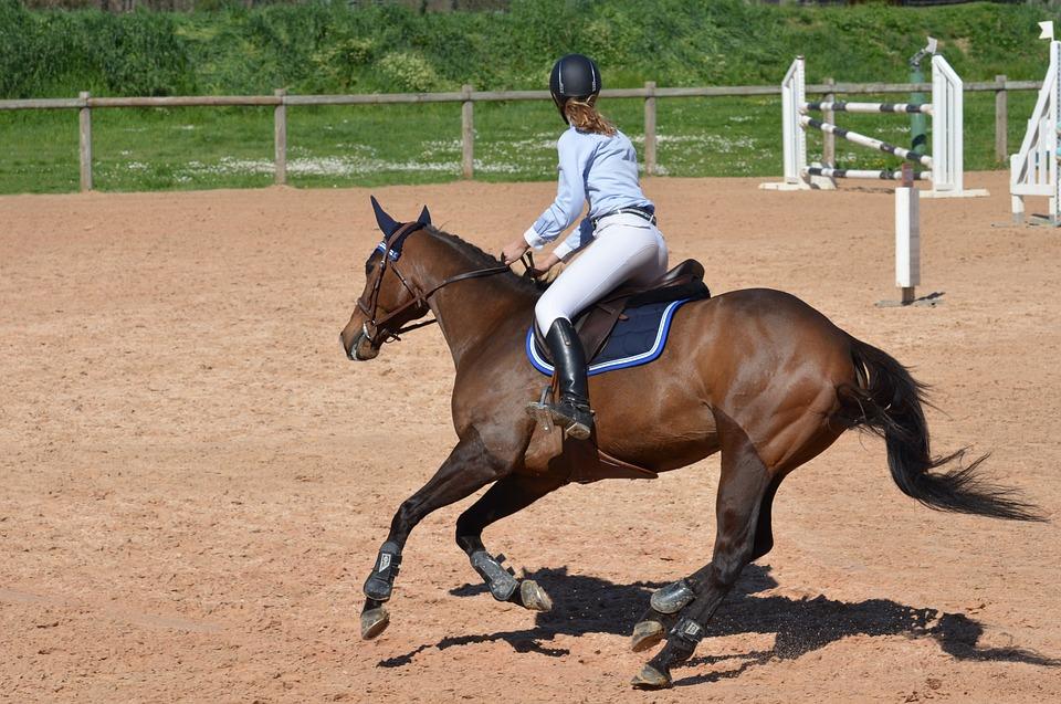 horse-806397_960_720_CC.jpg