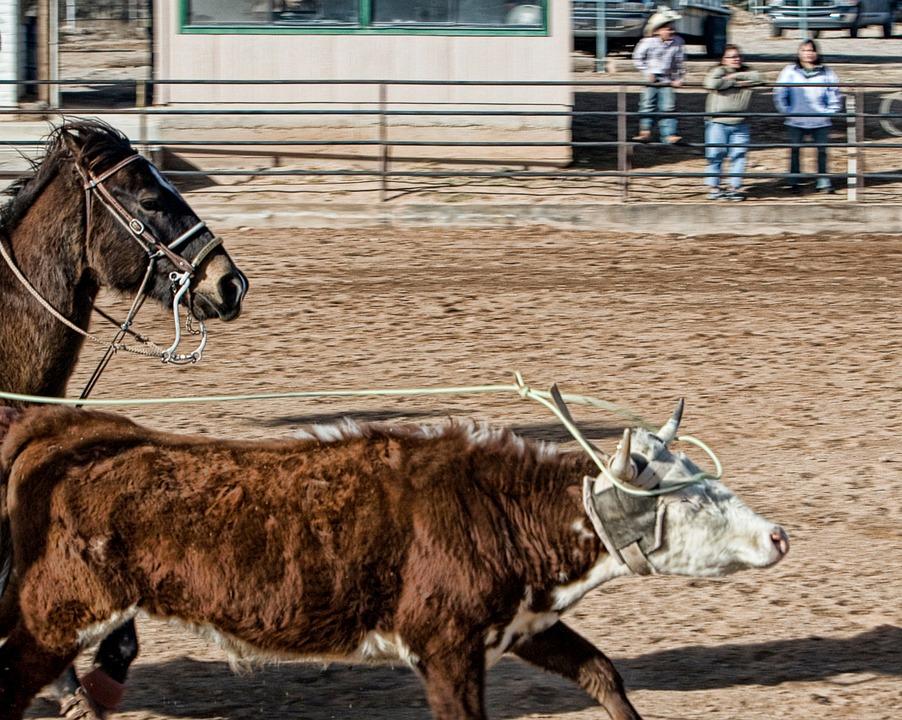 horse-419099_960_720_CC.jpg