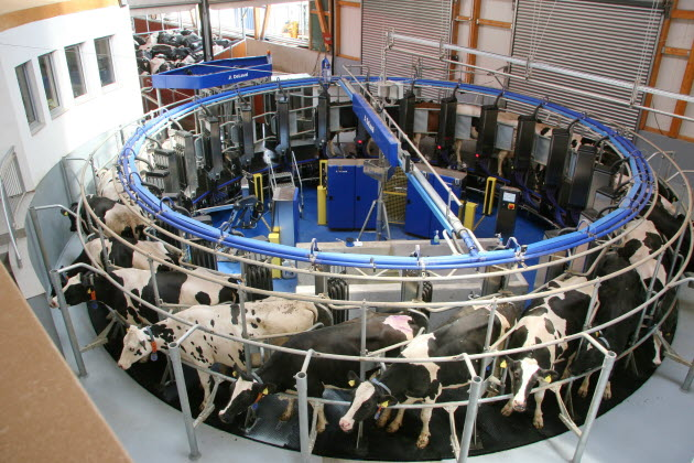 Delaval automatic milking rotary system amR™
