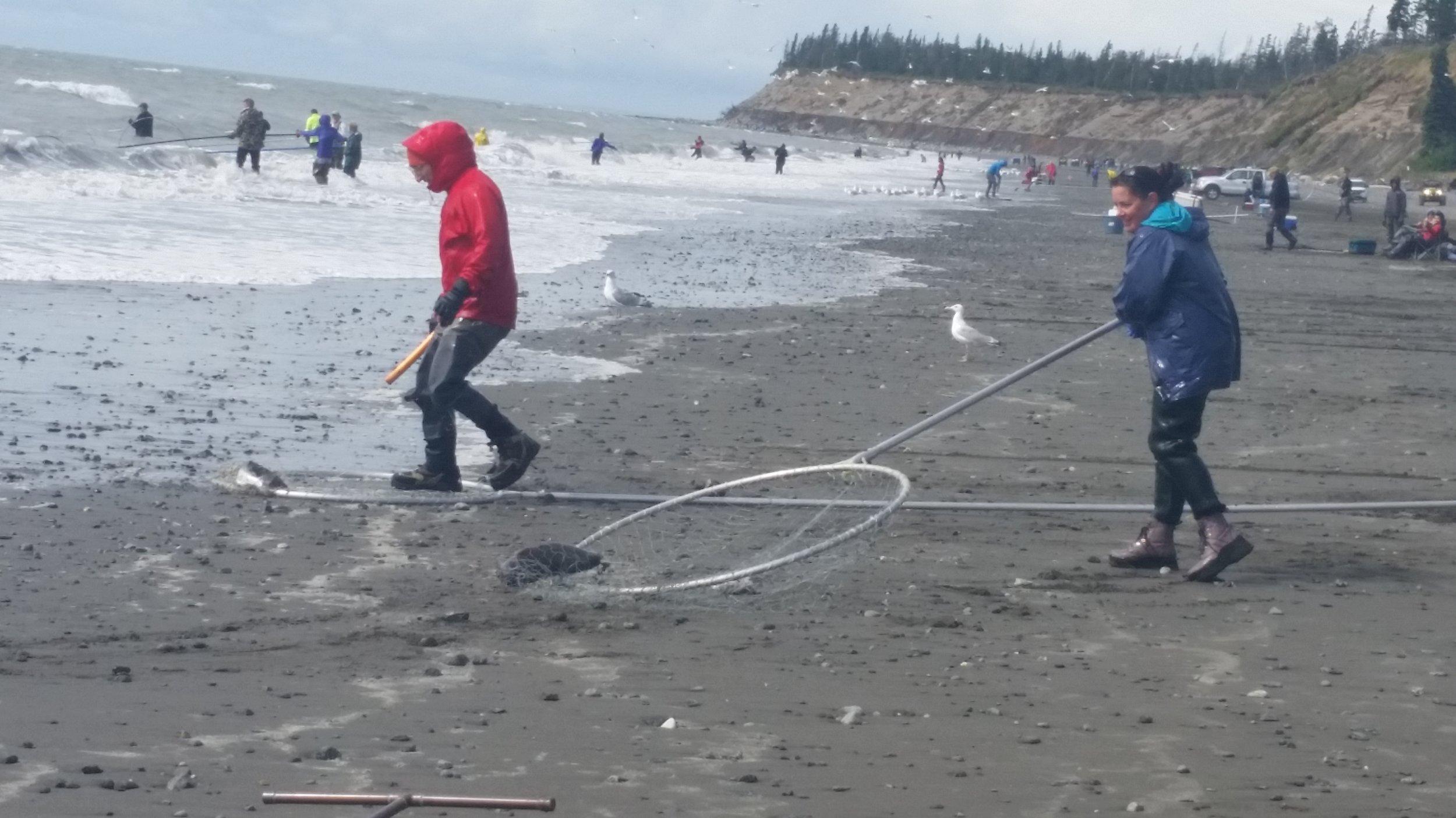 Alaska residents dipnetting for salmon along the kenai river