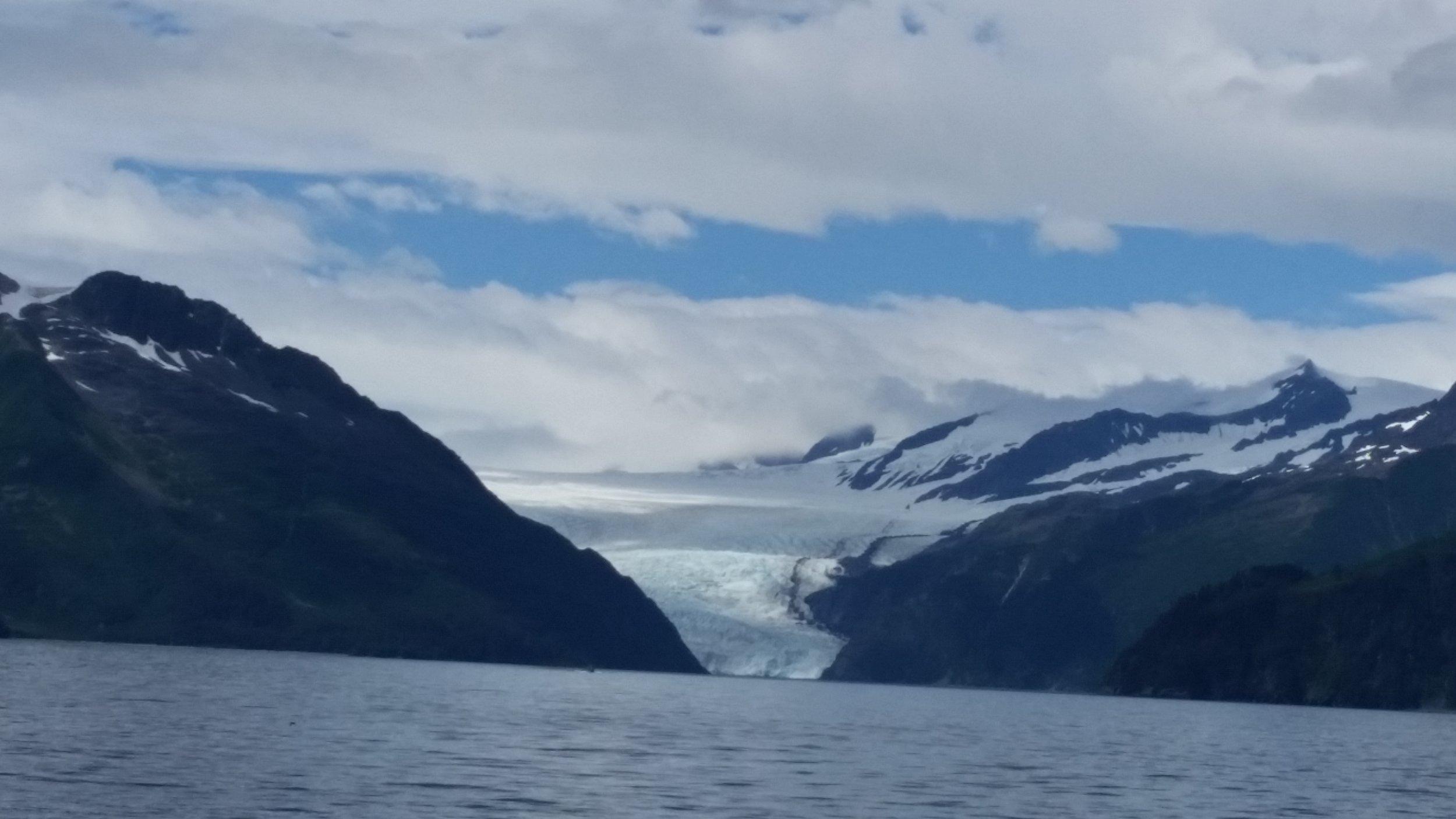 Glacier/wildlife day cruise out of seward