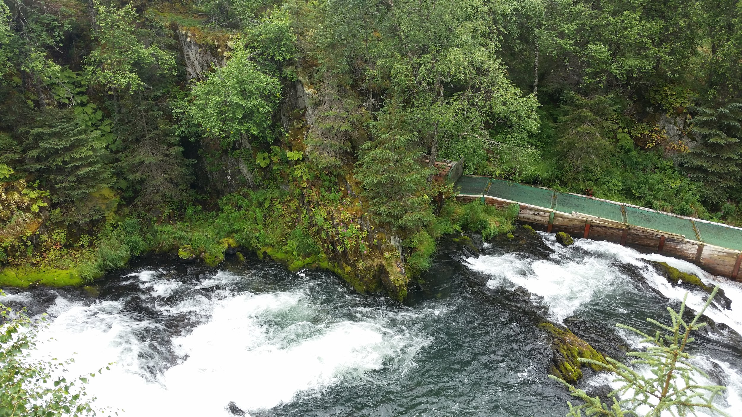 2 mile hike to see Russian river falls (time your trip to see spawning salmon)