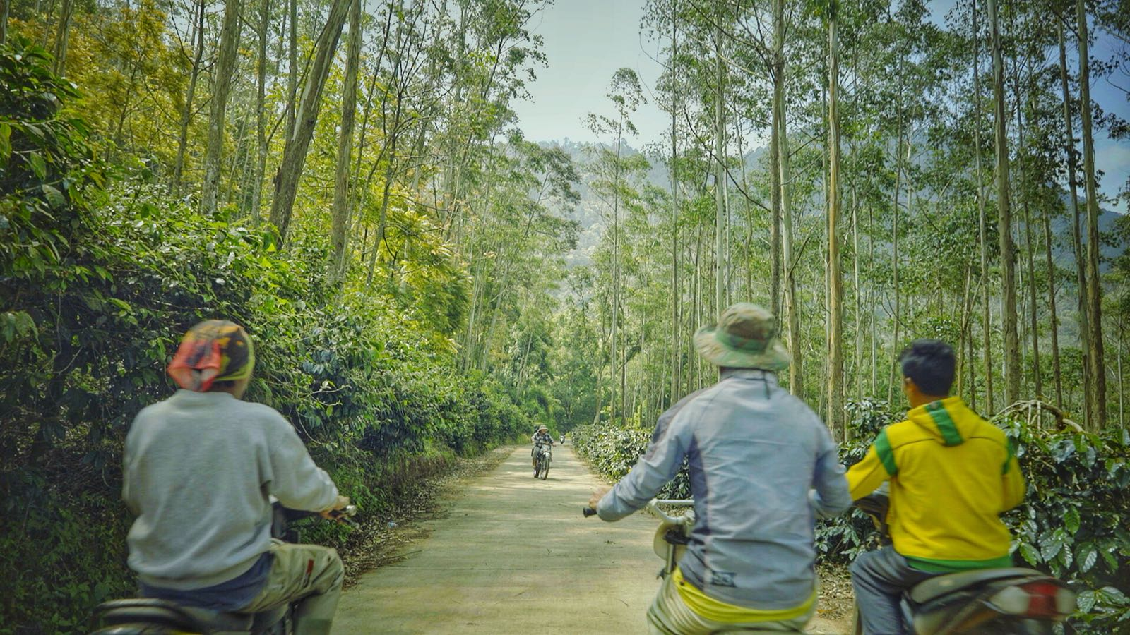 Our farm is high in elevation and requires a motorbike or small car to reach it. The farm is shade grown, which means it is embedded with natural trees. The trees allows numerous species of birds to live and therefore eat insects that harm the coffee plants. This is one reason we can farm organically, the farm is in balance with nature and no one species grows out of control.