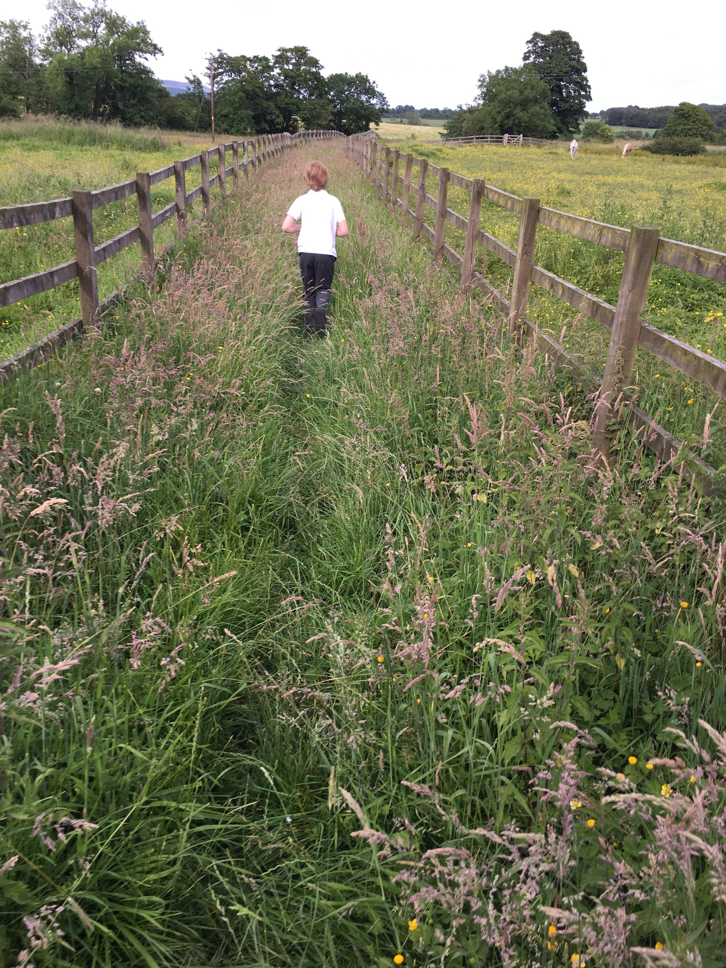 Arthur guiding me through the pastures.
