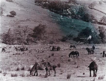 Wet Sleddale enclosure circa 1970. Photo courtesy the late Henry Harrison