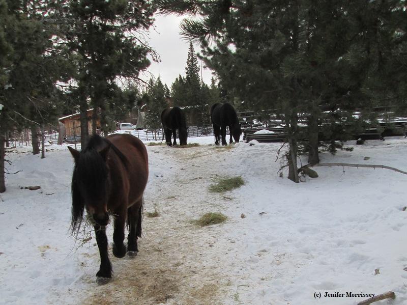 181111 ponies hay.JPG