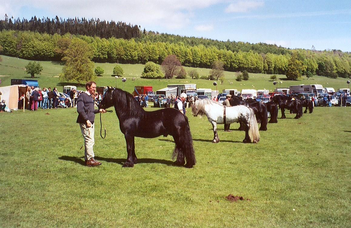 stallion show.jpg
