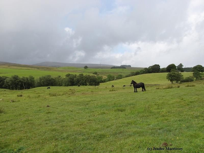150829 Greenholme pony.jpg