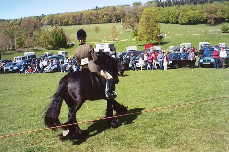 0505 Stallion Show2.jpg