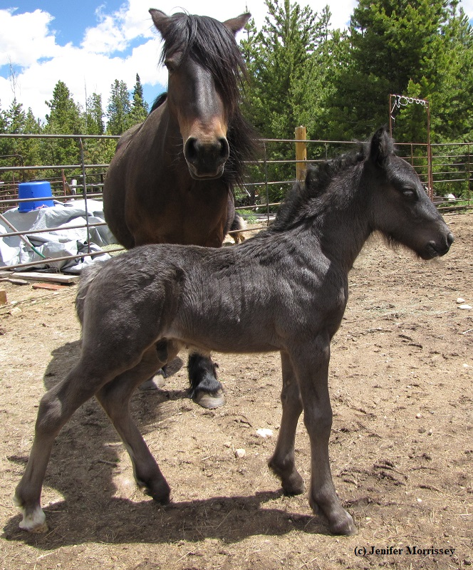 This is the foal that got the whole conversation going!