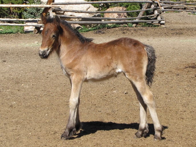 This foal's color was obvious, thank goodness:  mealy effect on bay.