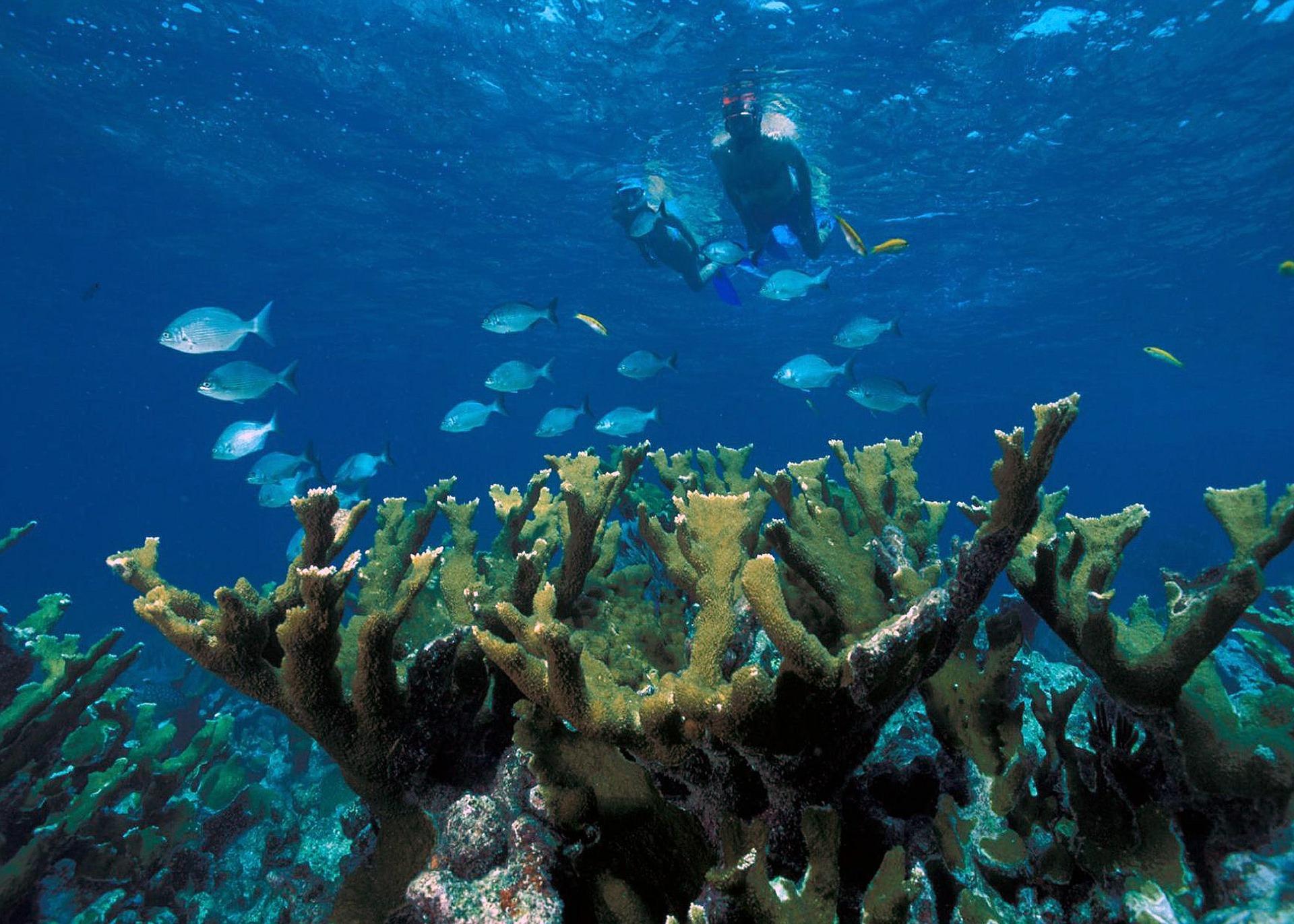 elkhorn-coral-589407_1920.jpg