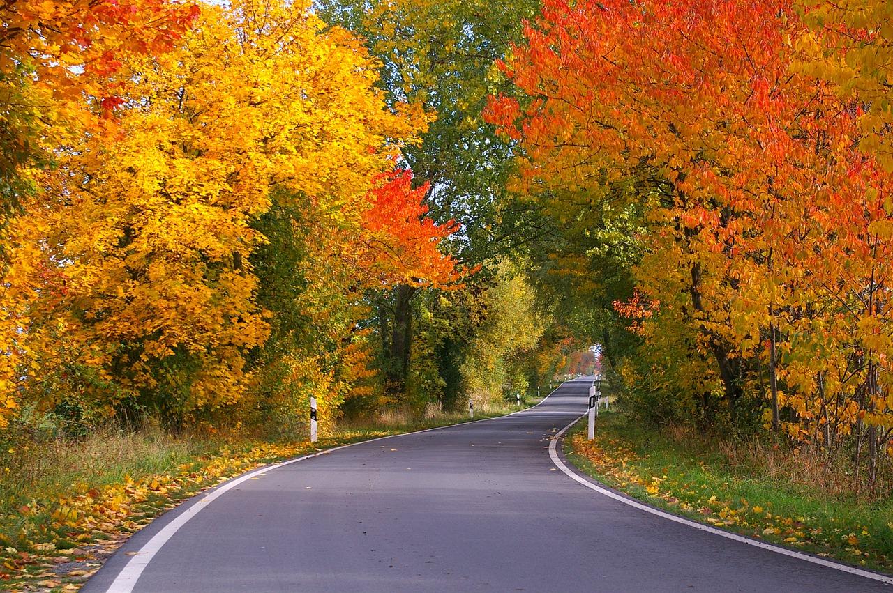 autumn-1010544_1280.jpg