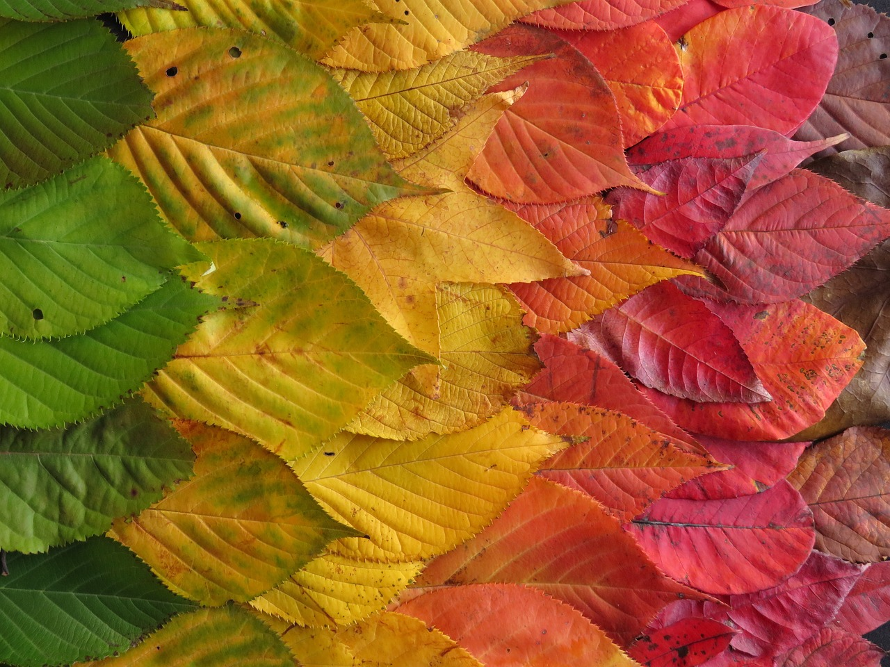 autumn-leaves-1460731_1280.jpg