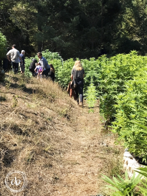 Emerald Country Cannabis Tour