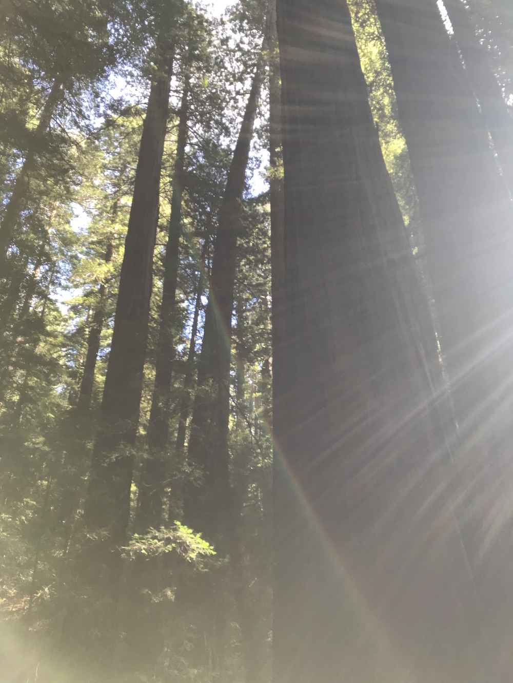 Casually Baked, Avenue of the Giants