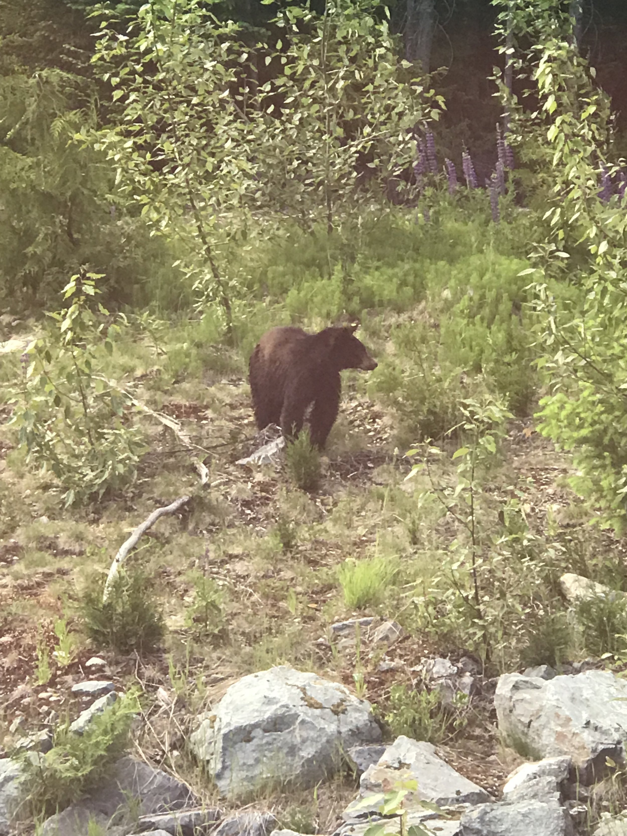 BEAR sighting.jpg