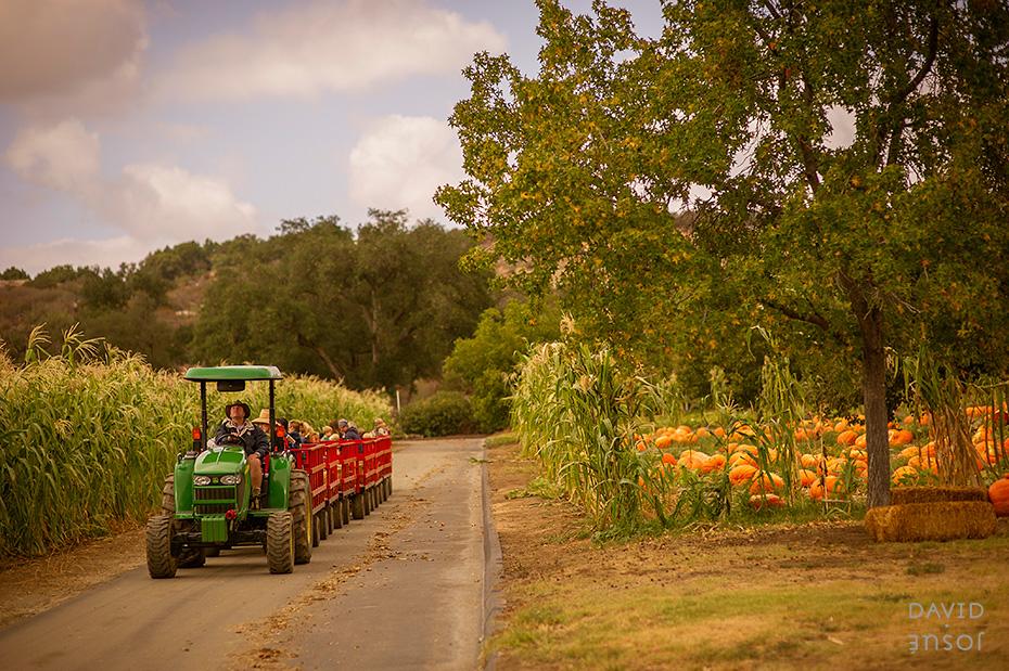 0056_cumple_suegro_bates-nut-farm-pumpkin-patch_101013-edit