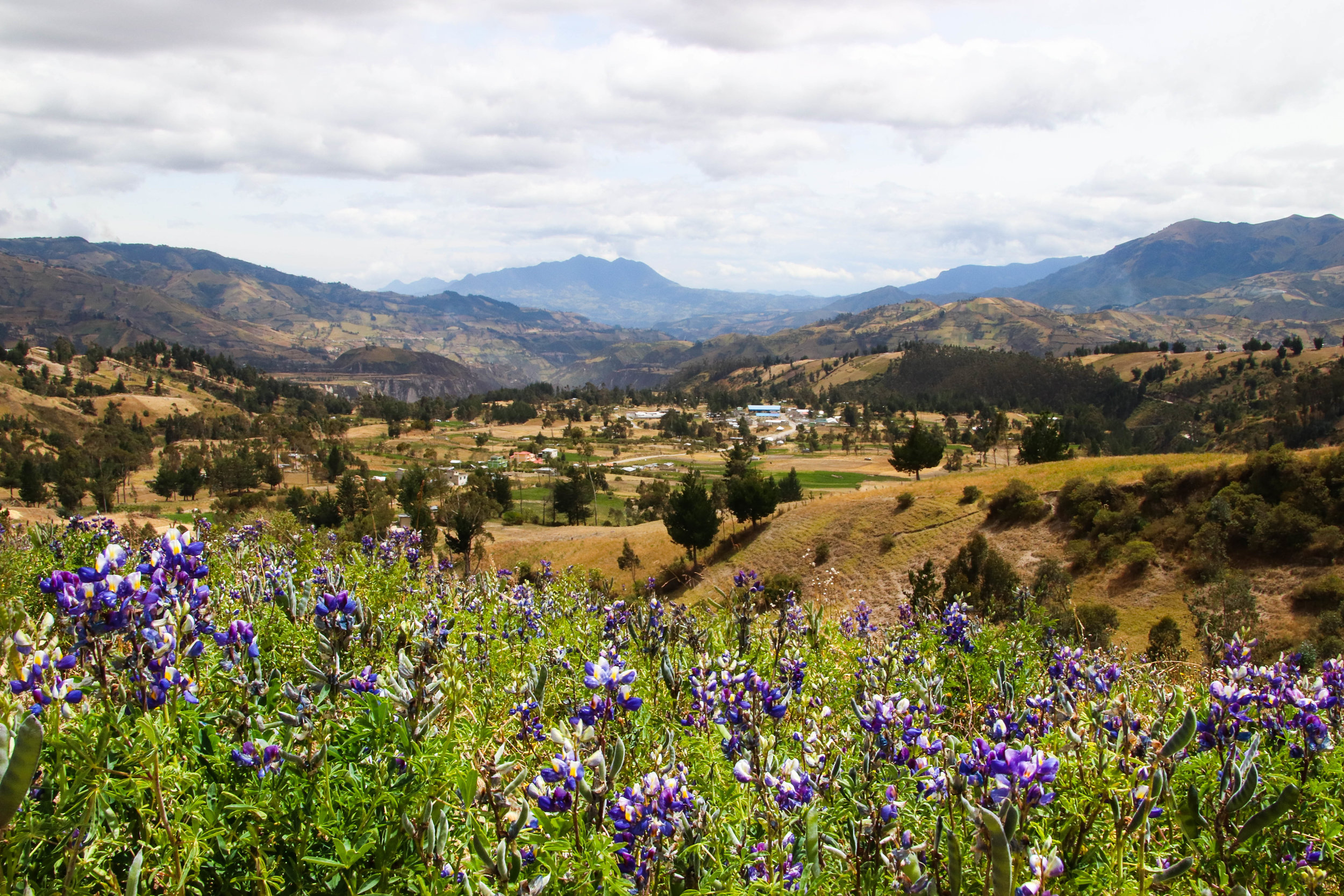 Flowers Quilotoa Loop Ecuador South America