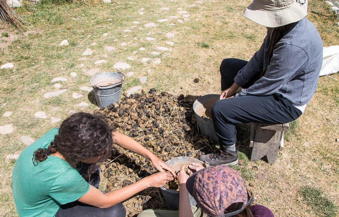 IMG_2128Girls Farm Work.jpg