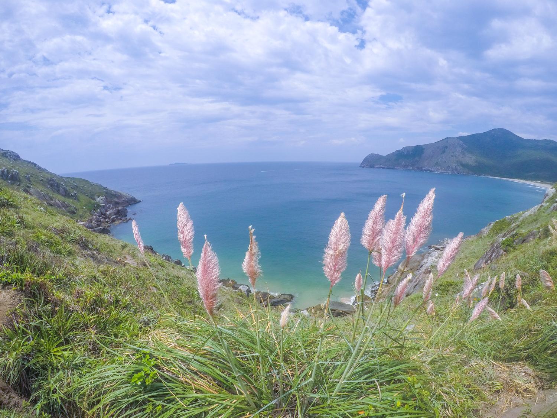 florianopolis-flowers-coastline.jpg