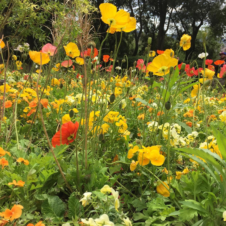 Amazing Wildflowers