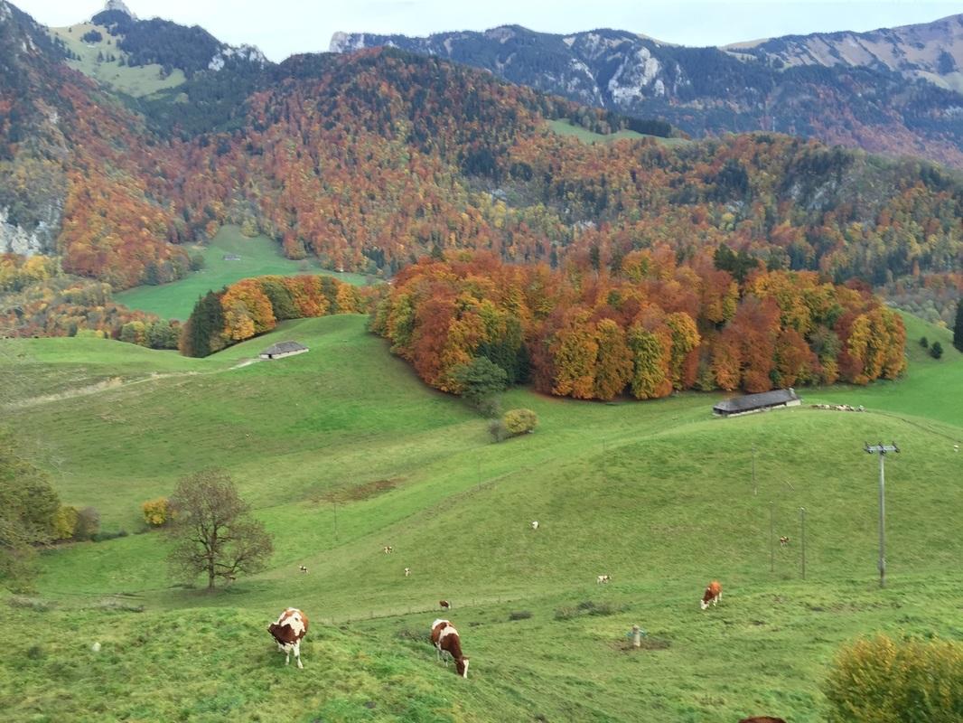 The beautiful pastures of Gruyeres