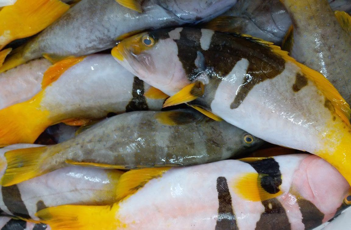 Fresh Fish - 2.jpg