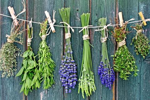 D_herbs_drying_against_fence.jpg