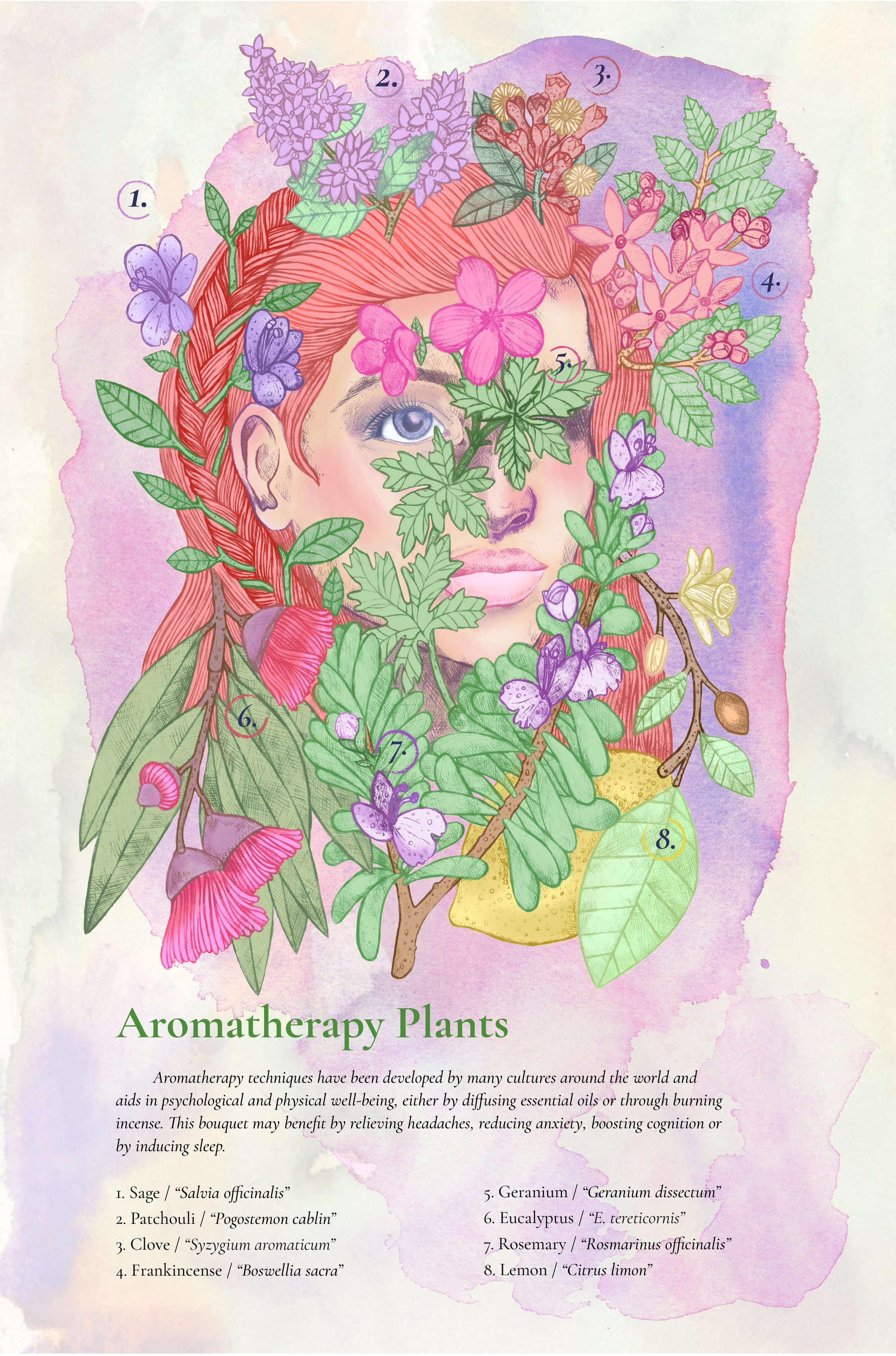 AromatherapyPlants_StephenMcdowforweb.jpg