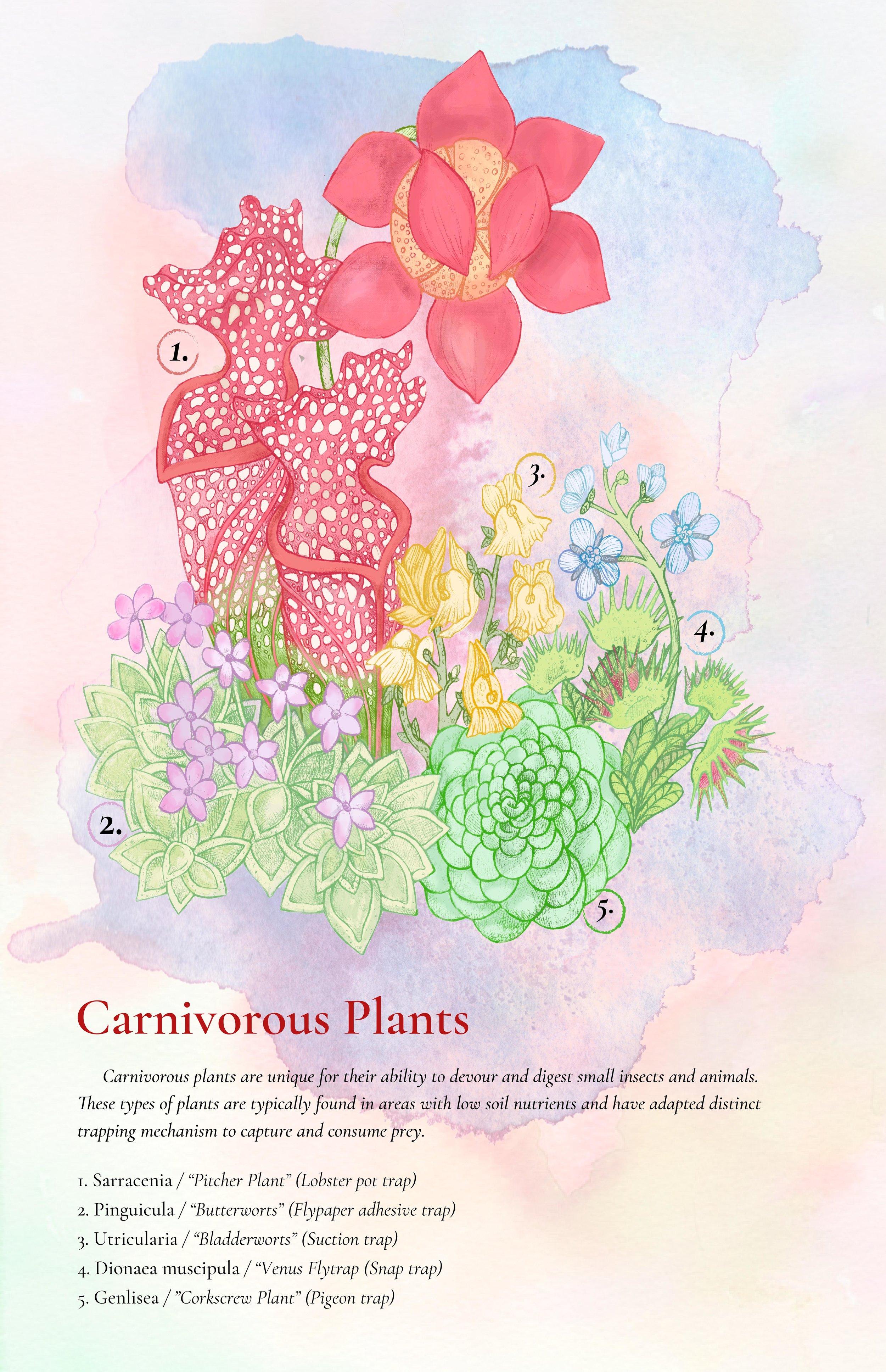 CarnivorousPlantTraps_StephenMcdowforweb.jpg