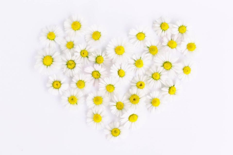 daisy-1535532_960_720.jpg