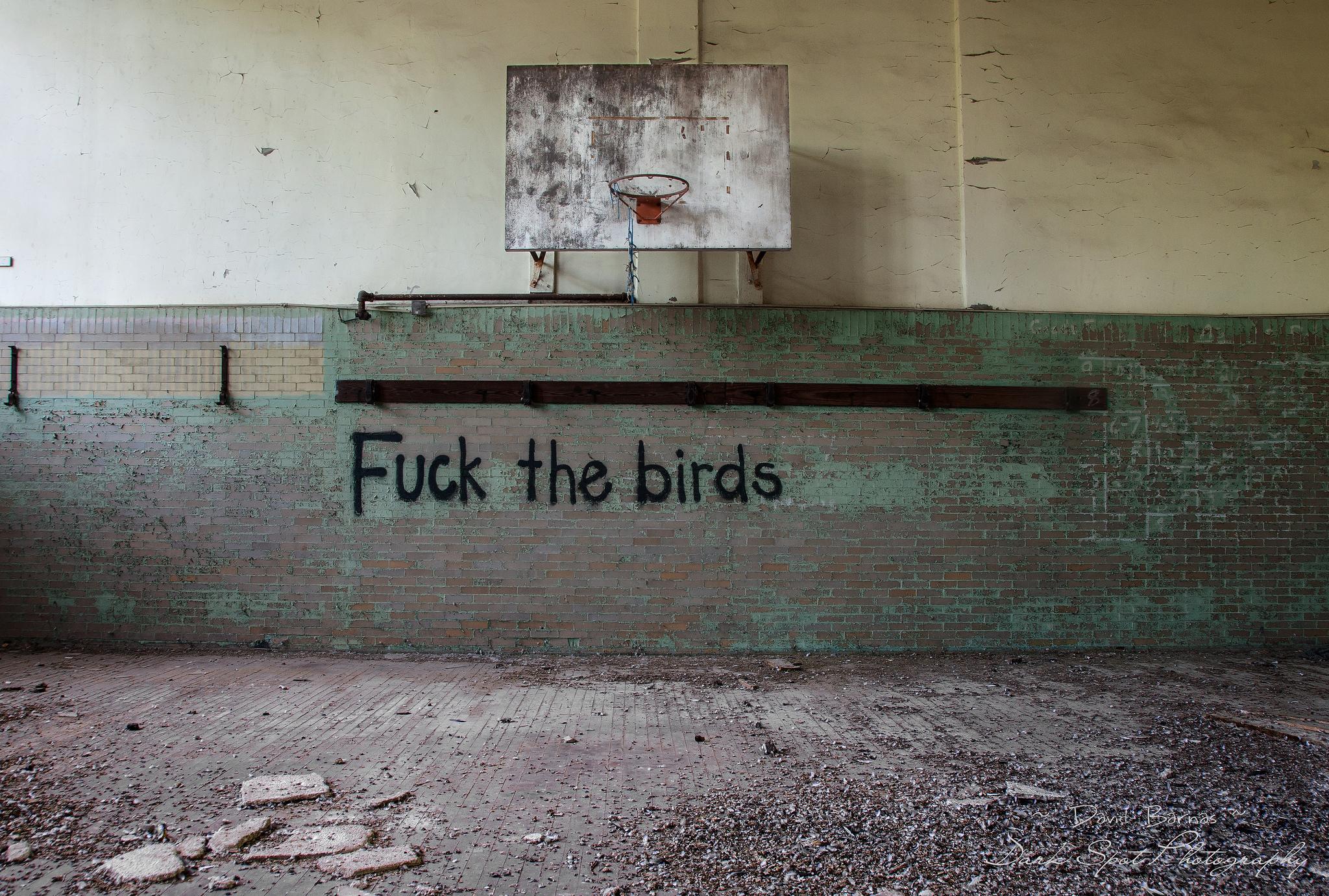 fuckthebirds.jpg