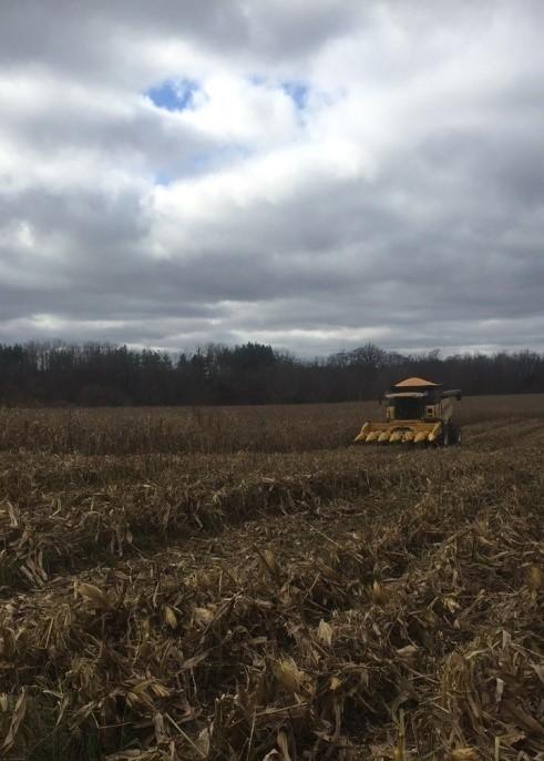Corn Combining 2016