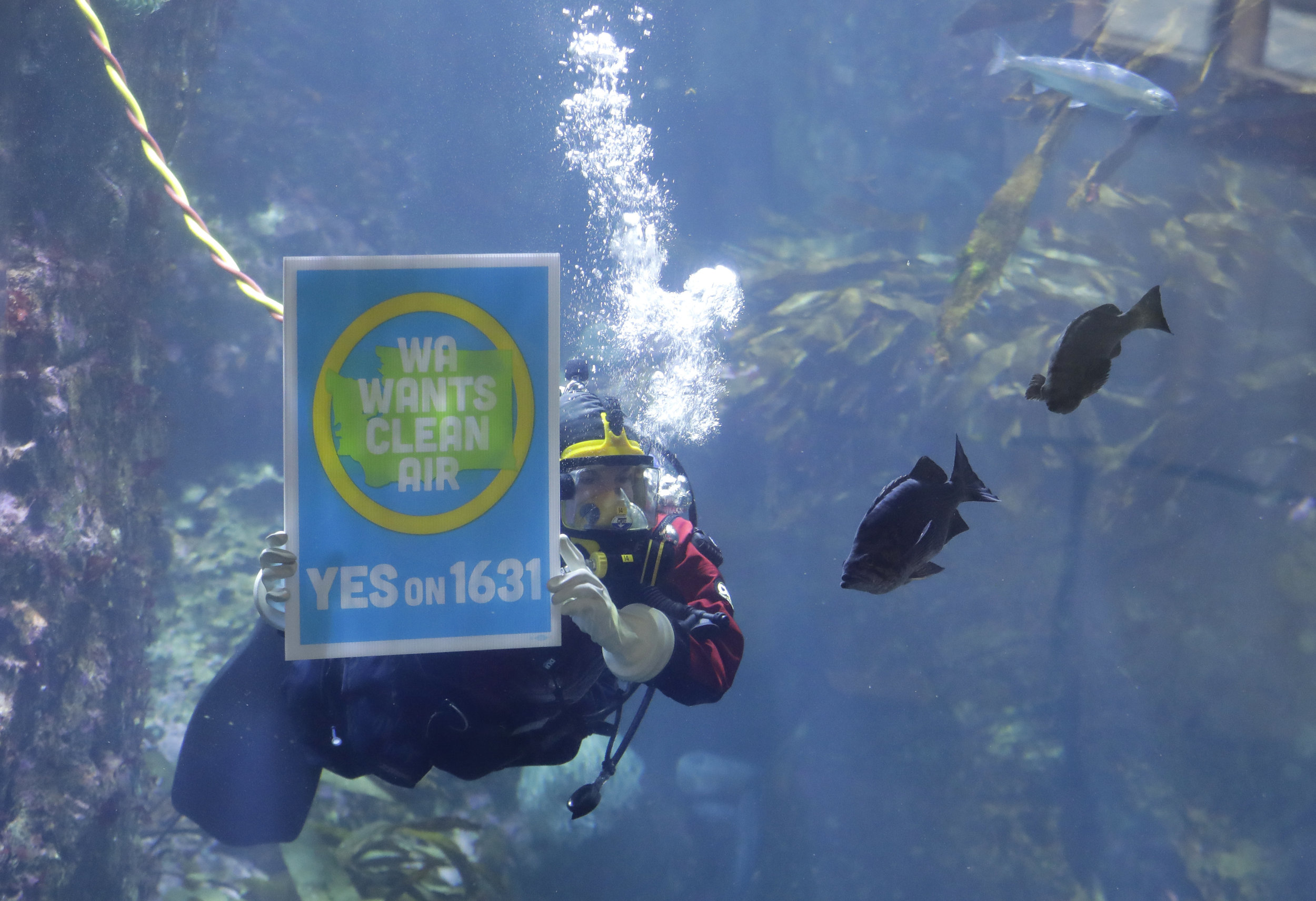 A diver at the Seattle Aquarium advocates for Washington's proposed carbon fee on October 25, 2018. The measure was defeated on Tuesday, November 6th.  (AP / Ted S. Warren)