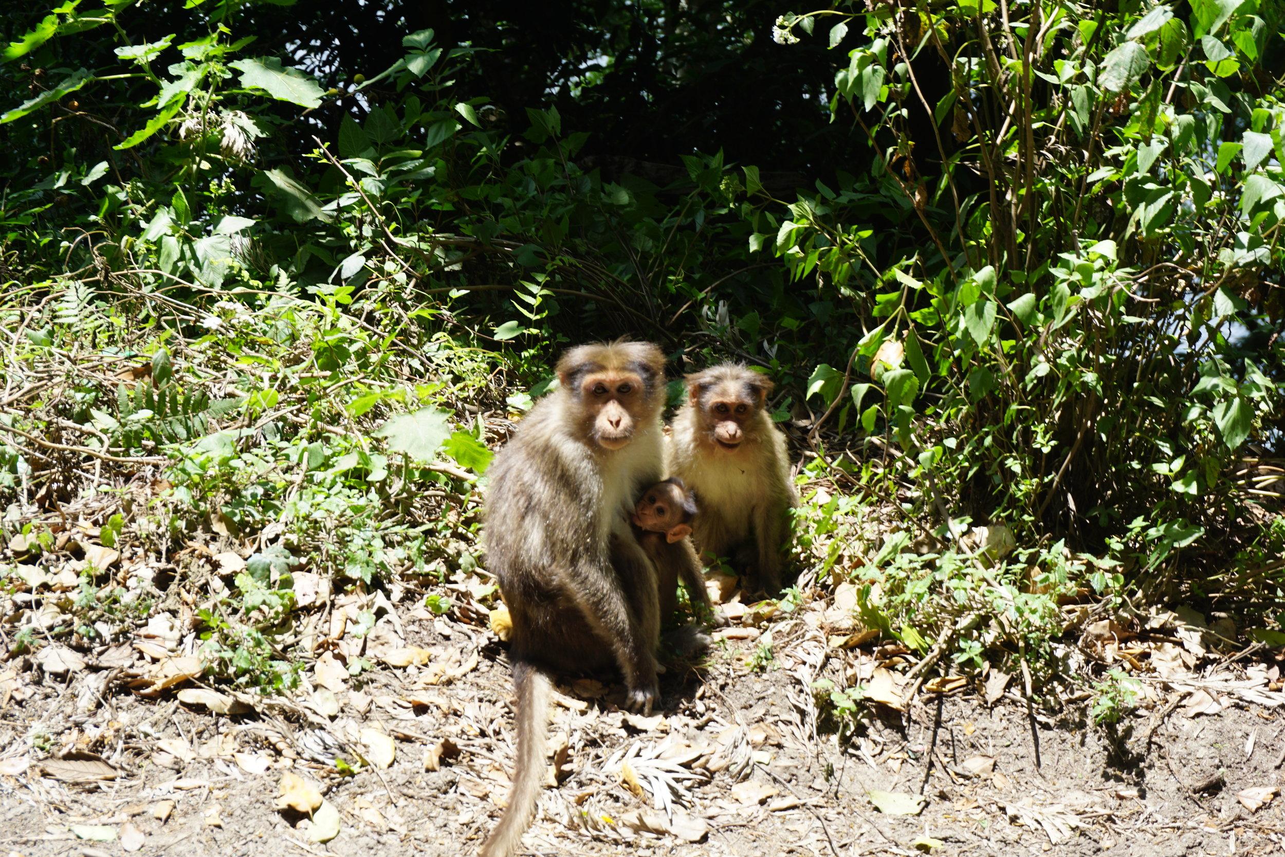 monkeys-india-travel