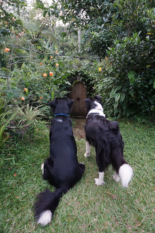 dog-travel-nature