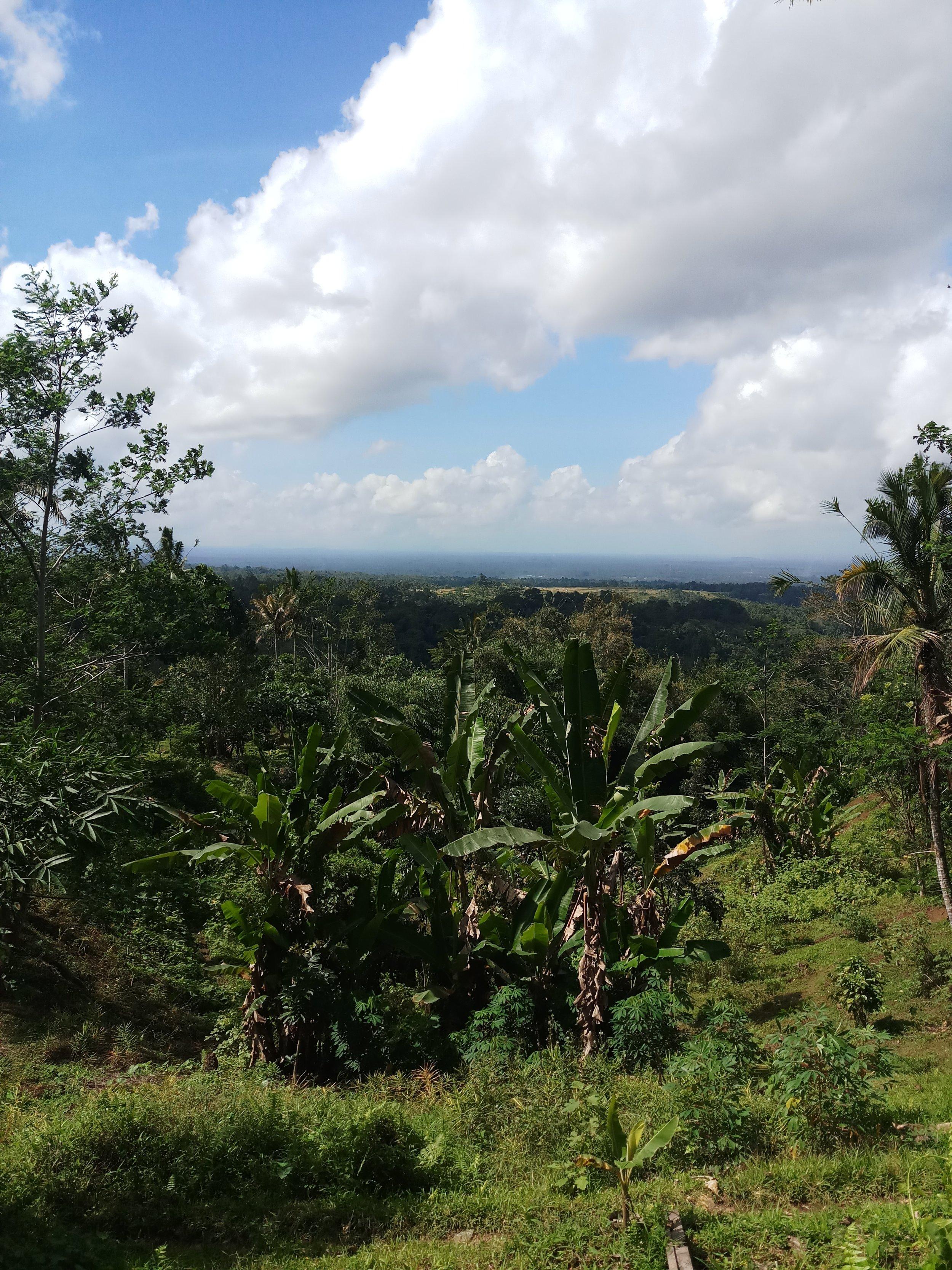 bali-nature-travel
