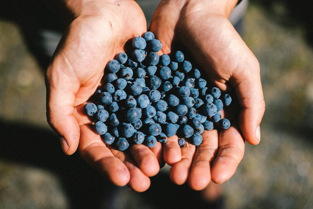 nature-forage-health