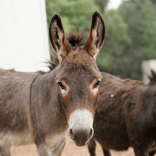 Designed. Built. Occupied. And to answer your question; Yes, donkeys are amazing. Welcome to the family little ones 💕