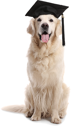 dog-no-woof.png