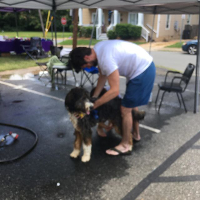 Charity dog wash today! @nodabarkandboard @birdsongbrewing @greatdanefriends @nodaclt