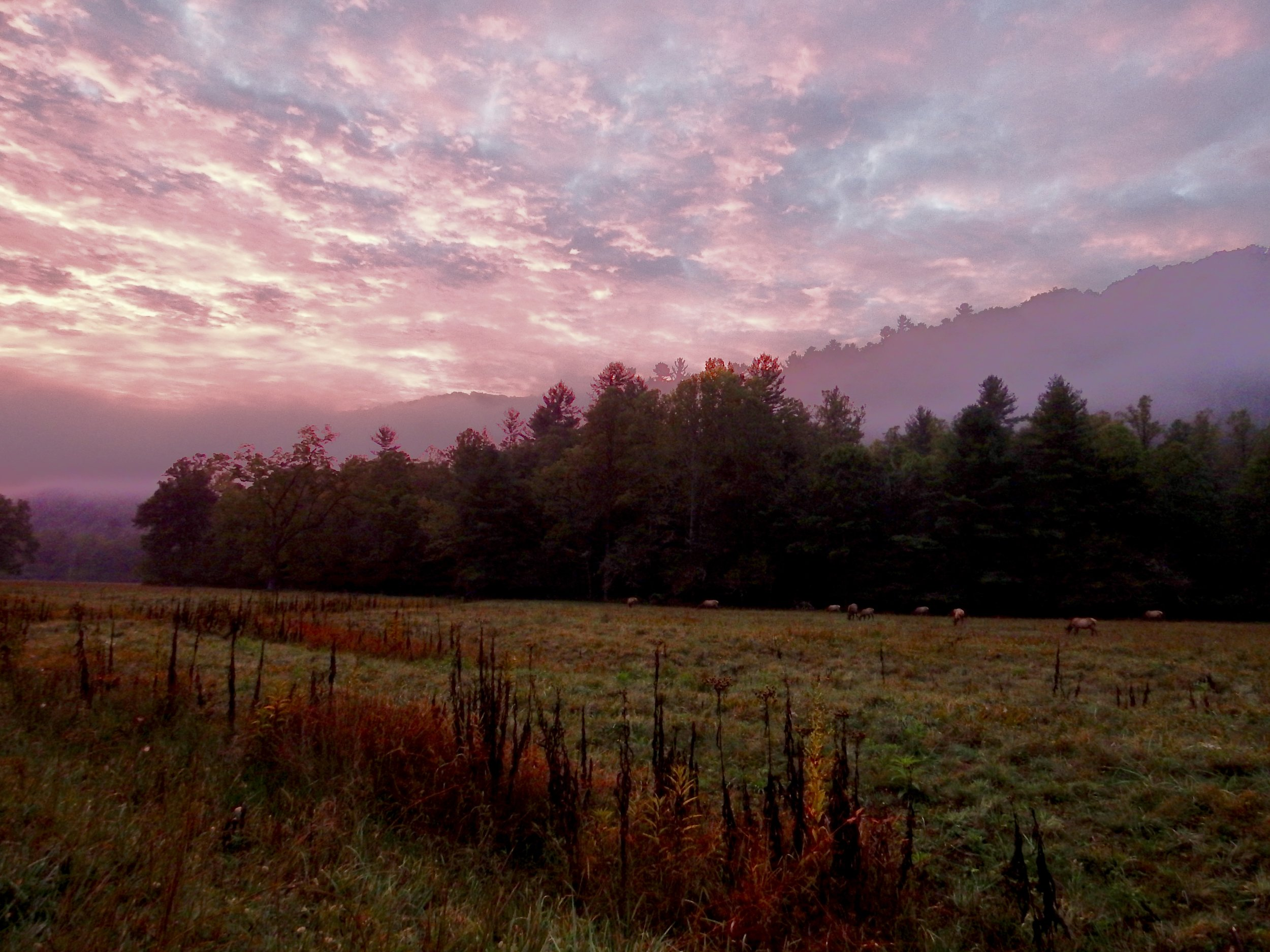 Sunrise in Cataloochee Valley…a herd of elk barely visible in the background.