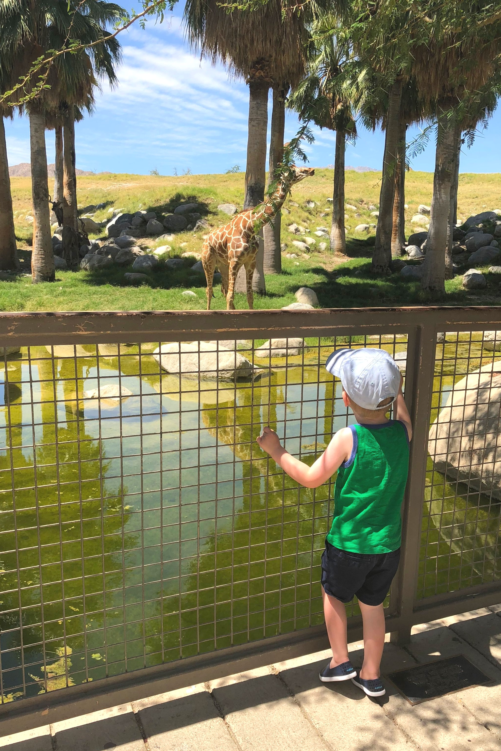 Our sons loved the Living Desert Zoo and Gardens.