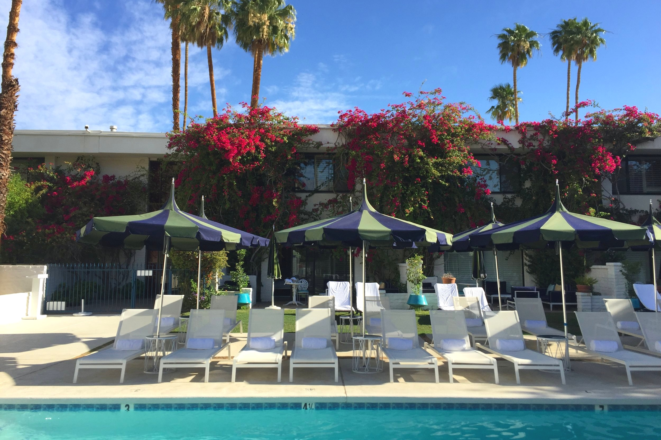 The Parker Palm Springs is so dreamy, isn't it?