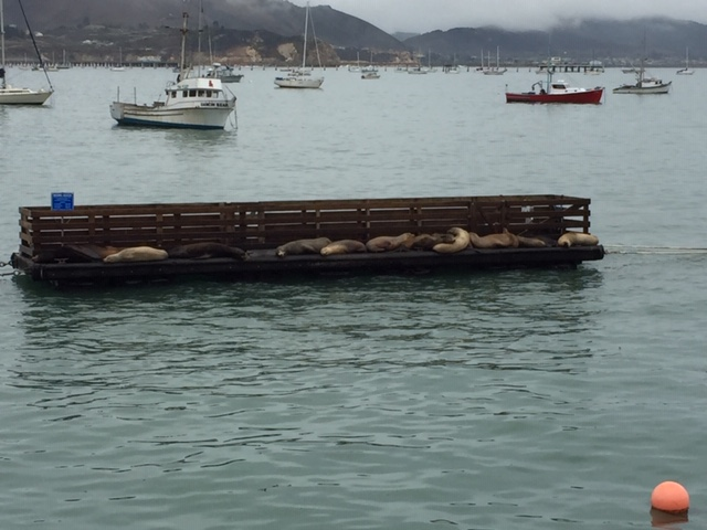 "The reason this is so funny is because the sign reads: ""Working Pier."" These seals are just useless lie abouts. They will never work."