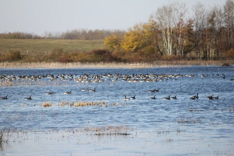 Canada Hunting Trip, Oct., 2011, Mike,Dugan,Doc,Johnnie & Justin 556.JPG