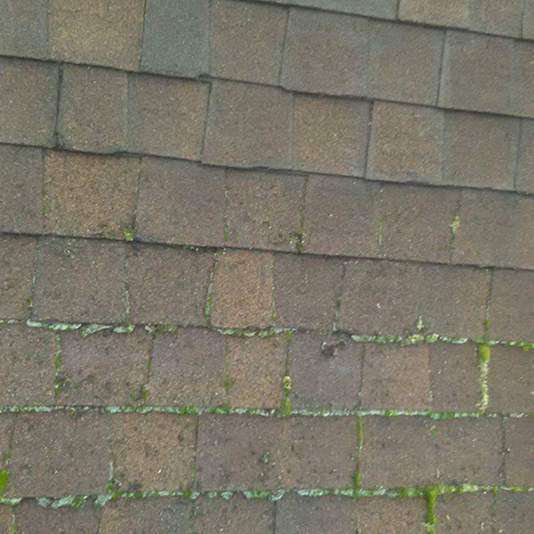 COMMERCIAL & RESIDENTIAL   MOSS REMOVAL  See Our Work