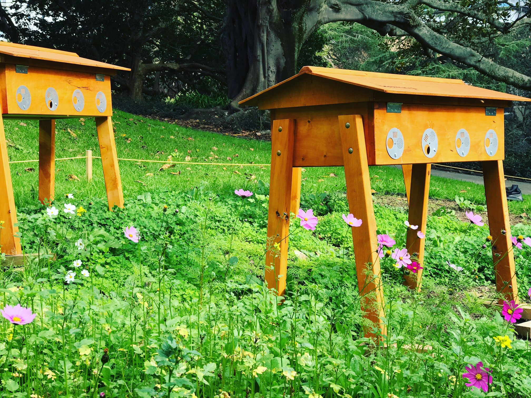 Bees in Parks -